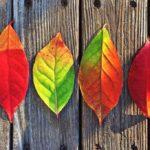 Módní trendy podzim 2016